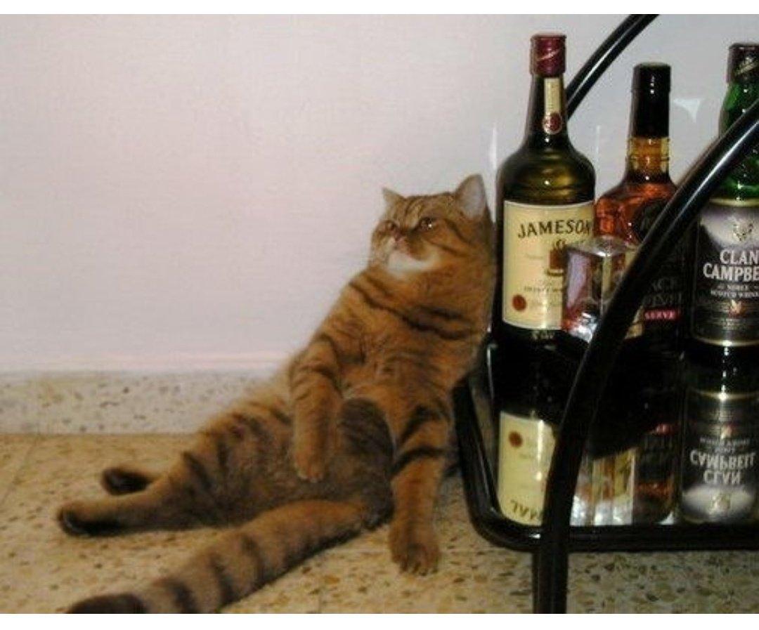 Для, открытки поздравляю надо выпить