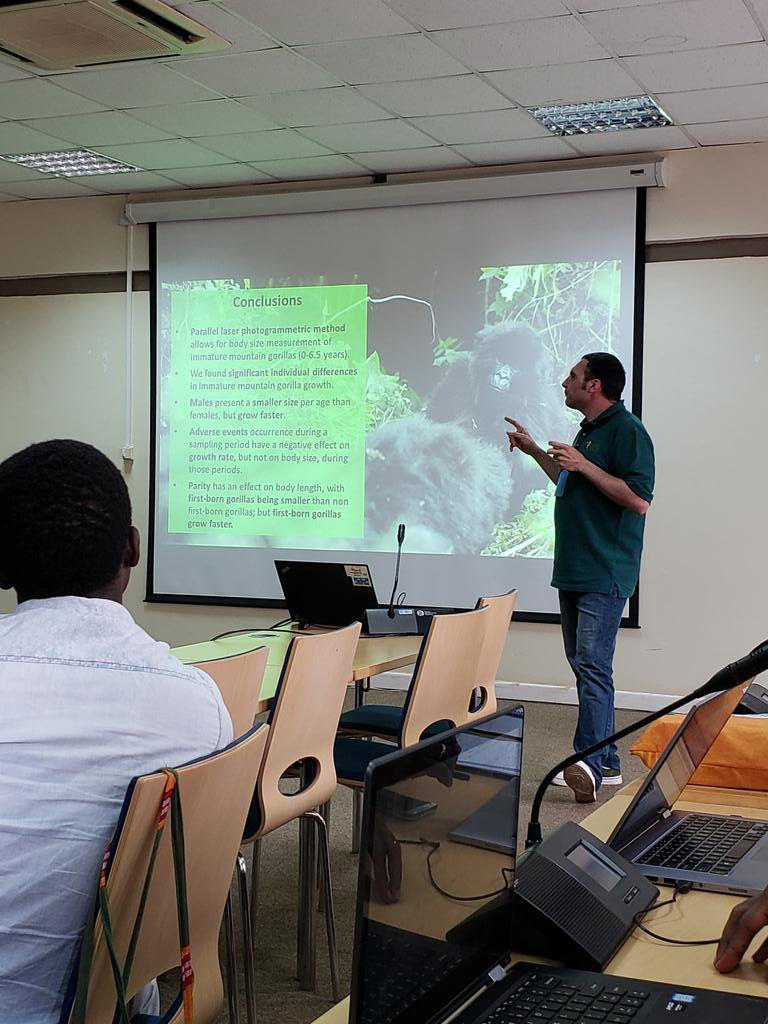 Interesting evidence for compensatory growth in first born Mt gorilla infants, infants who experience adverse events from @jordigalbany @S_McFarlin and colleagues. #ips2018 @SavingGorillas