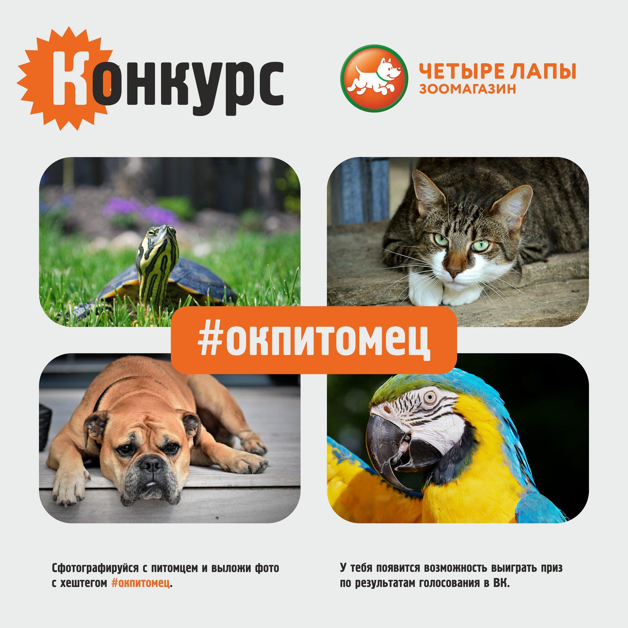 Конкурс фотографий домашних животных