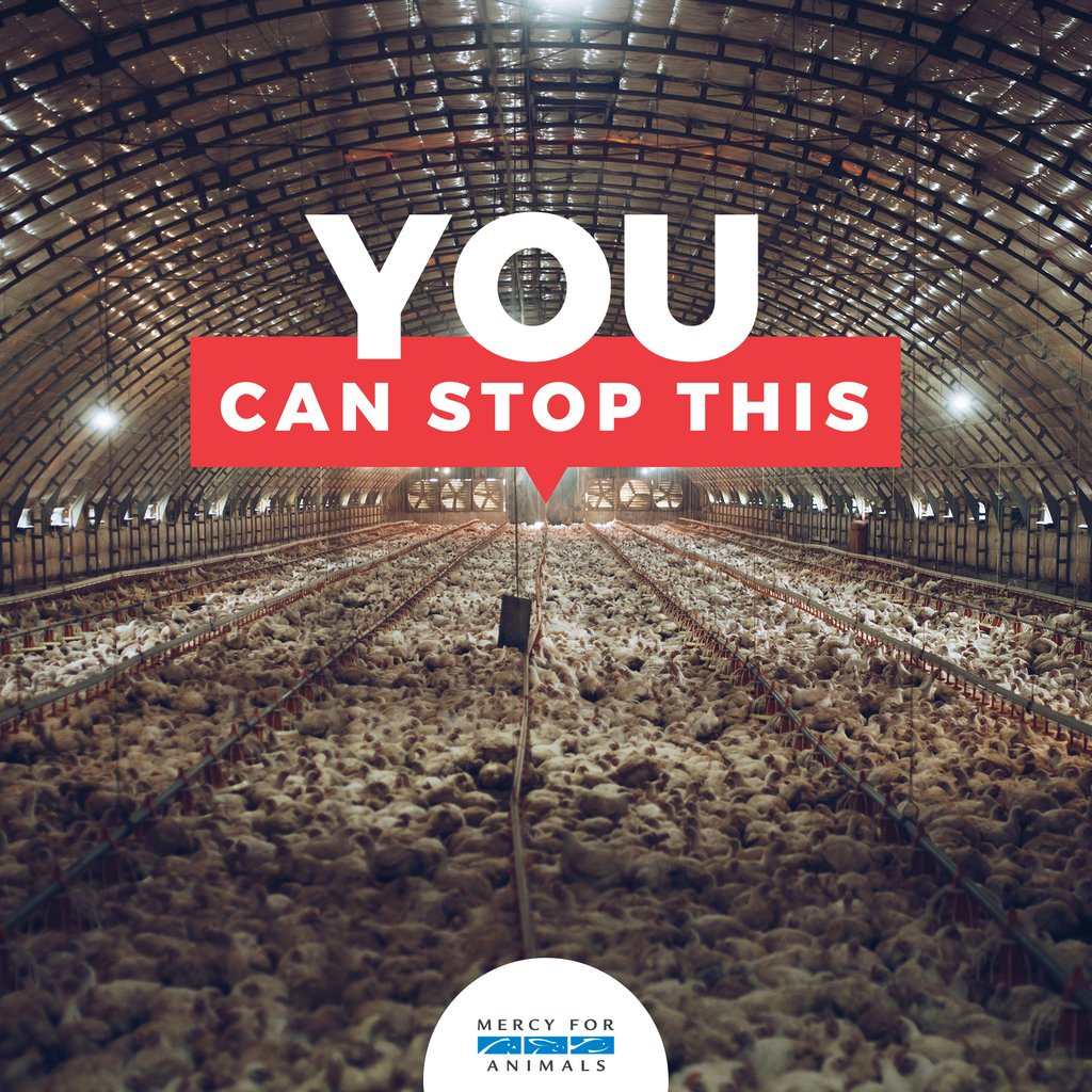 You have the power to end factory farming. <br>http://pic.twitter.com/PSUnjN8O84
