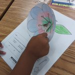 Image for the Tweet beginning: 3rd grade Mystery Science pollination