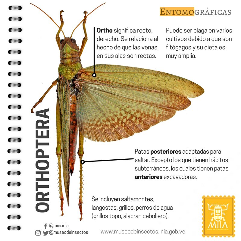 Museo de Insectos (@museodeinsectos) | Twitter