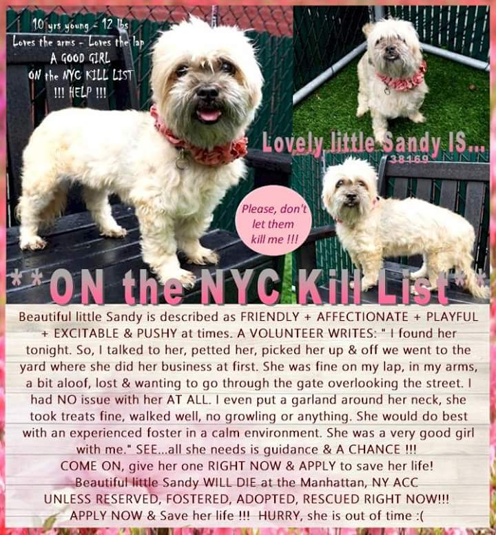 These 3 DOGS are AT RISK THIS AFT, #nycacc! Pls HURRY 2;  http:// facebook.com/Mldsavingnycdo gs &nbsp; …  or MustlovedogsNYC@gmail.com or  http:// Newhope.shelterbuddy.com/Animal/List  &nbsp;   2 #foster #adopt #pledge PLS HELP 2 SAVE A DEAR LIFE!           <br>http://pic.twitter.com/C131K98zyw