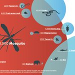 Image for the Tweet beginning: #DYK: The mosquito has caused