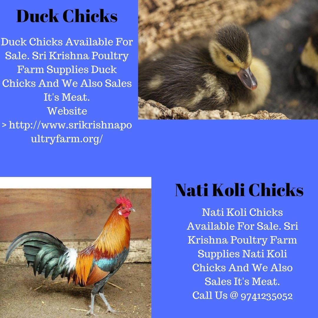 Sri Krishna Poultry Farm (@SriFarm) | Twitter