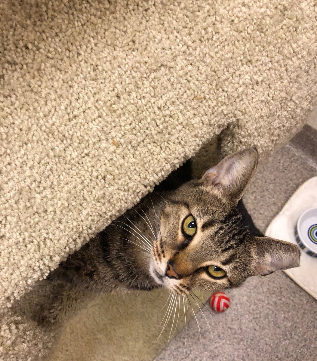 Cat Depot on Twitter: