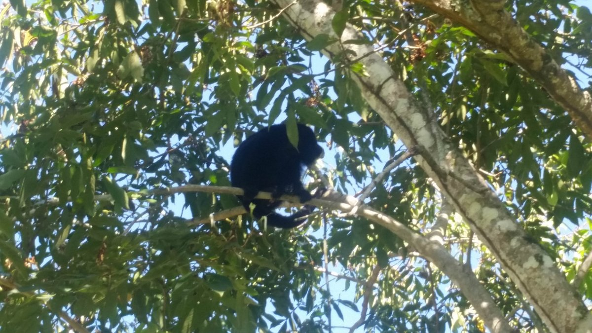 test Twitter Media - Spotted by guests last week! Come to visit us at Black Orchid Resort ~ you never know who might swing by.AeroMexico to start flights to Belize this Fall https://t.co/USRvihb7Gq  #Howler #Monkey #Belize #BlackOrchidResort https://t.co/E3DcdvNpyf