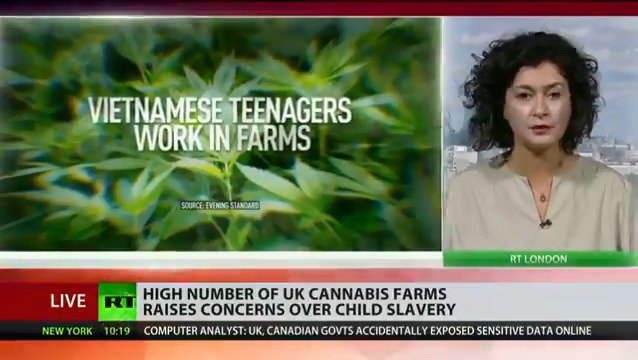 Child slaves exploited at hundreds of #cannabis farms across #London READ MORE: https://t.co/xizpRwyMQM https://t.co/WJNWKBZUVY