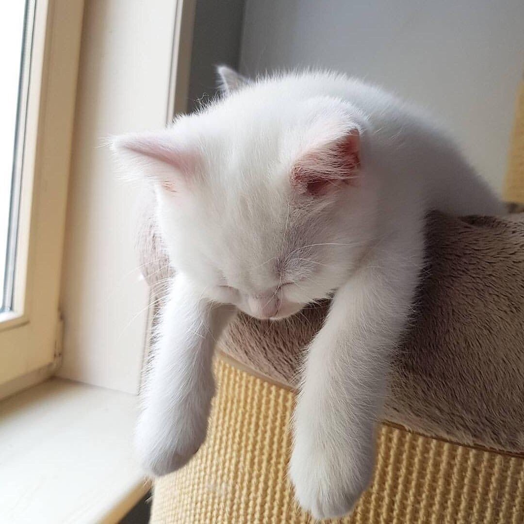 Прикольные картинки белый кот