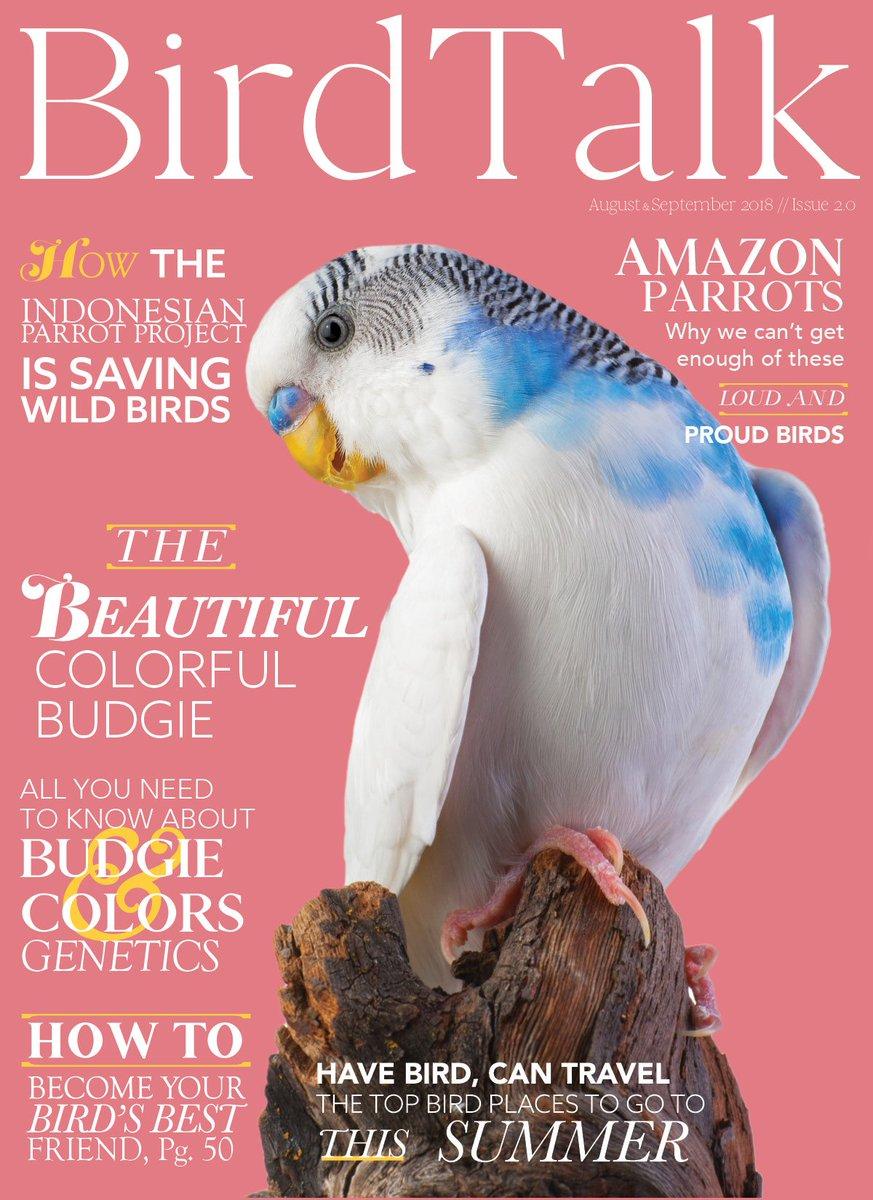 Bird Talk Magazine 🦜🎄 on Twitter:
