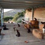 夢の職場wギリシャの「住み込みで猫の世話」するだけの求人に応募殺到!