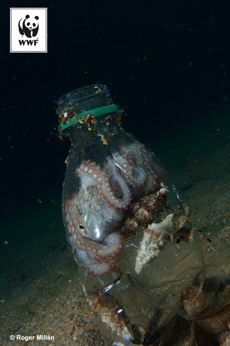 """WWF España 🐼 on Twitter: """"Una muestra más de los océanos de plástico, este  pulpo en botella. No podemos consentirlo. Ayúdanos a poner freno. Súmate a  a #AtrapadosEnPlástico en https://t.co/Z34JFxMrC7… https://t.co/0b6BXaOGBw"""""""