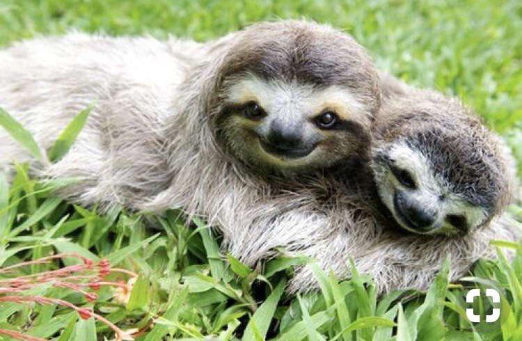 два ленивца фото небросский интерьер, ушевные
