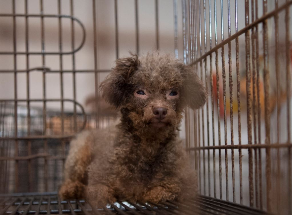 puppy mills final draft And owning a puppy or dog  this consultation relates to a draft proposal i have lodged as the first stage in the  to lodge a final proposal in the parliament.