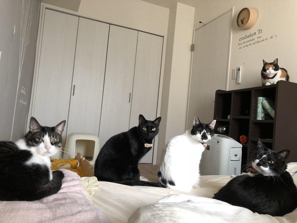 寝起き早々、圧がすごい!!時計がなくとも寝坊だと気づける猫圧がすごいwww