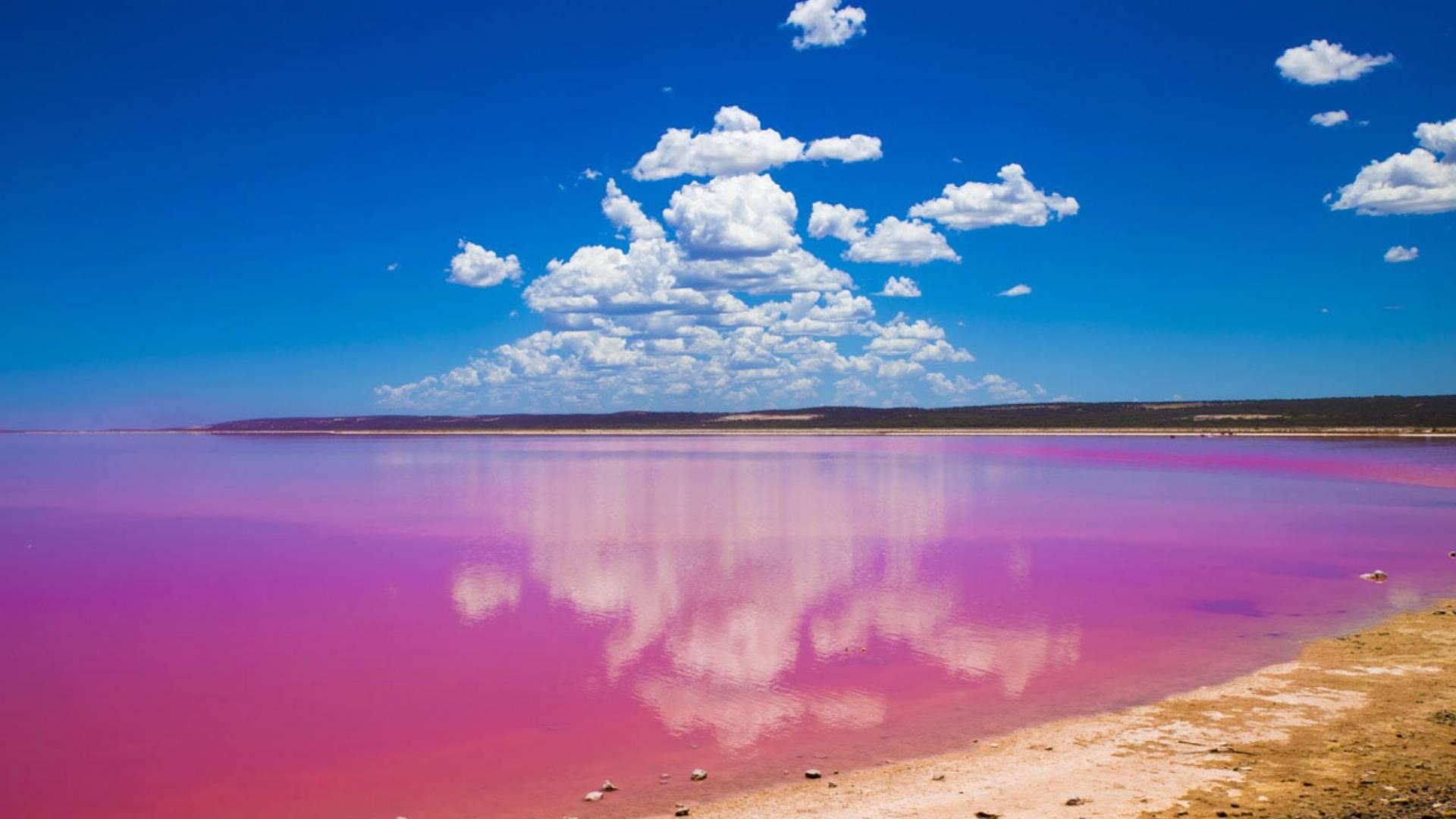 розовый озер фото