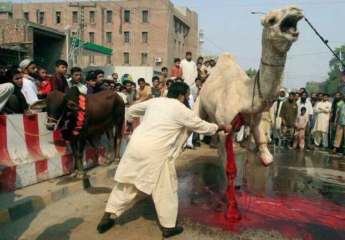 I'm sorry but no animal should suffer such a barbaric death in 2018. Can our leaders please stop wishing everyone a happy #EidMubarak & address this ancient medieval slaughtering of animals.