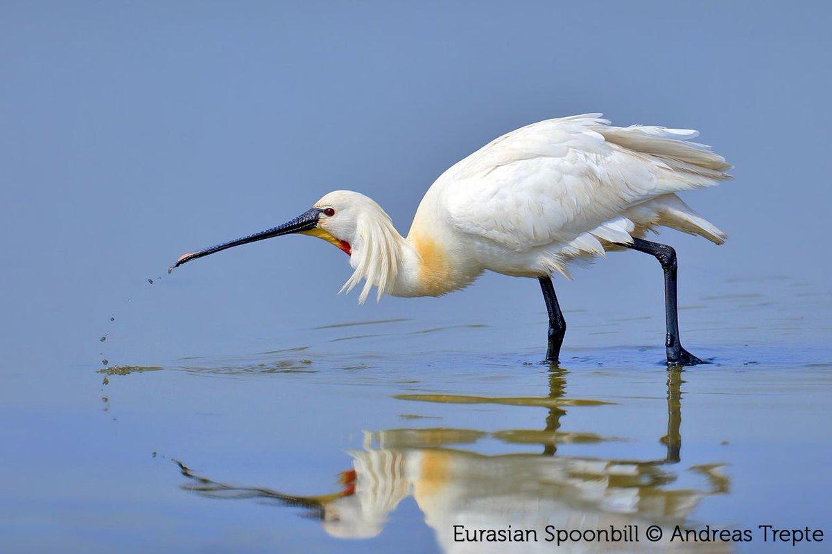 How should we manage the Yangtze River floodplain to maximise habitat for waterbirds? This study points the way: bit.ly/2BDzRTL #ornithology