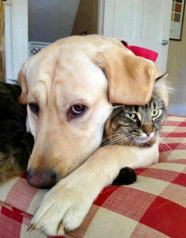 Прикольные картинки коты собаки