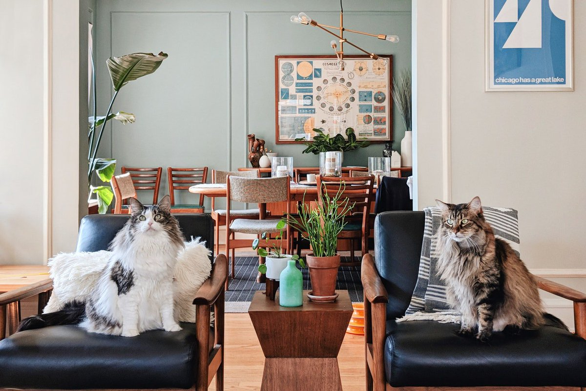 Remarkable Apartment Therapy On Twitter This Homes Got 100 Plants Home Interior And Landscaping Synyenasavecom