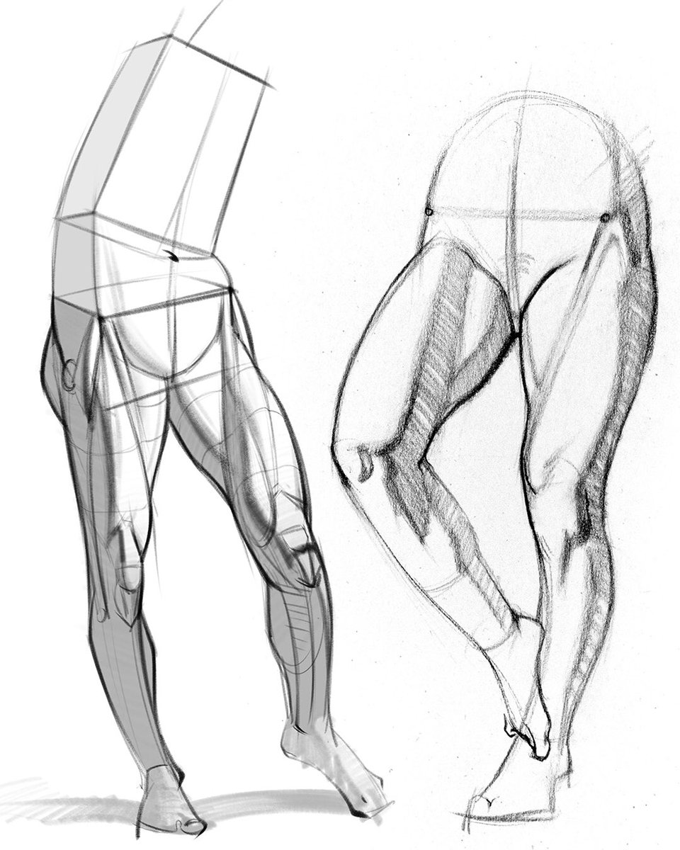 Stan Prokopenko On Twitter New Leg Anatomy Lesson Learn How To