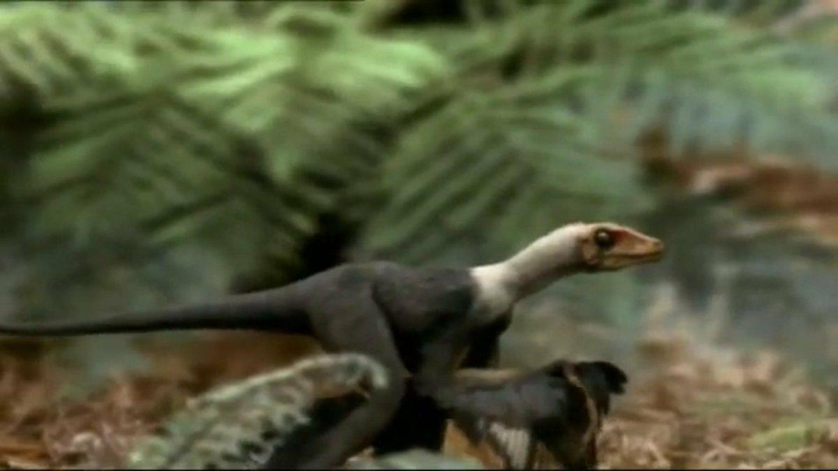 Prehistoric Park Microraptor