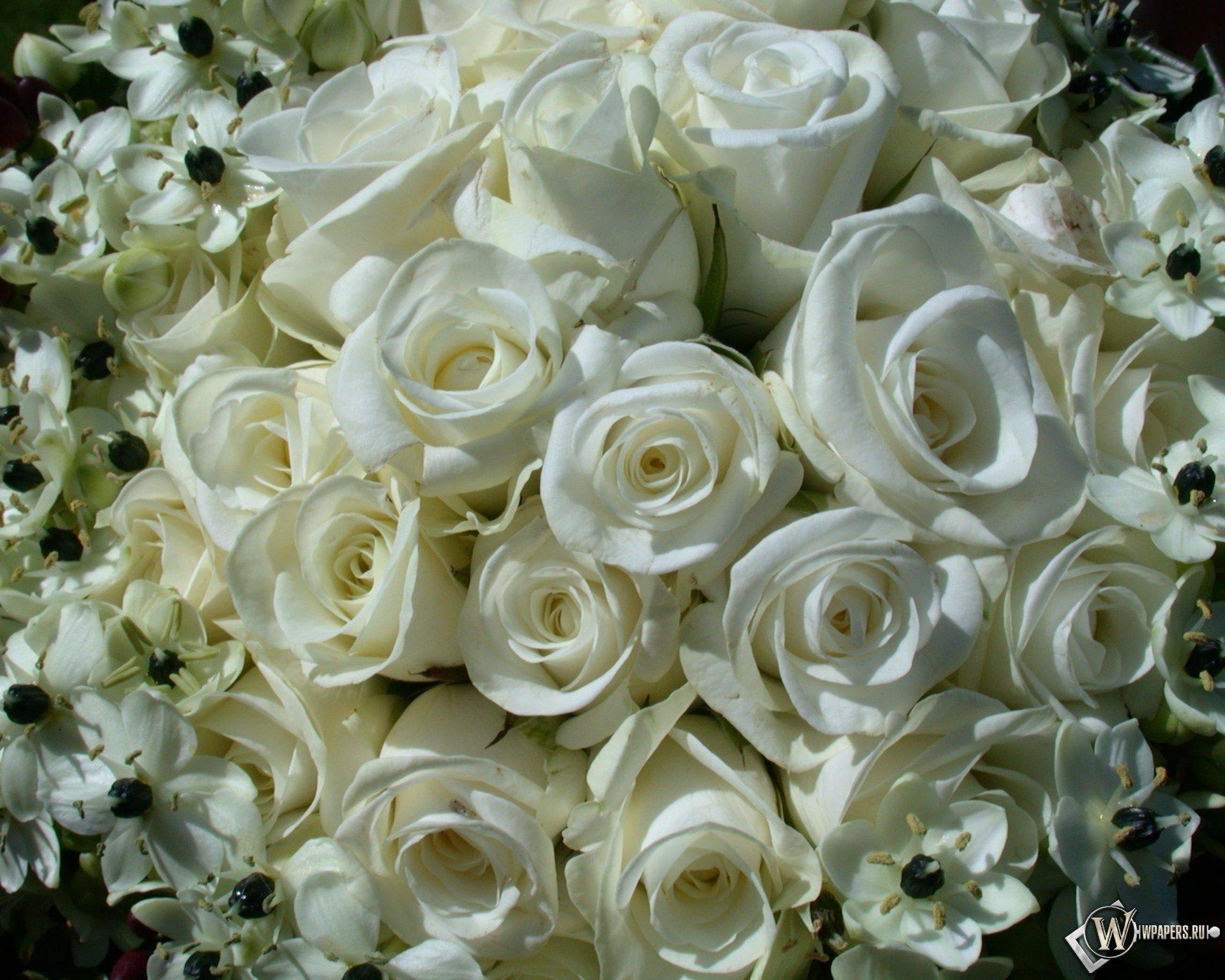 картинки самых красивых белых роз в мире рыбы обмакивают смеси