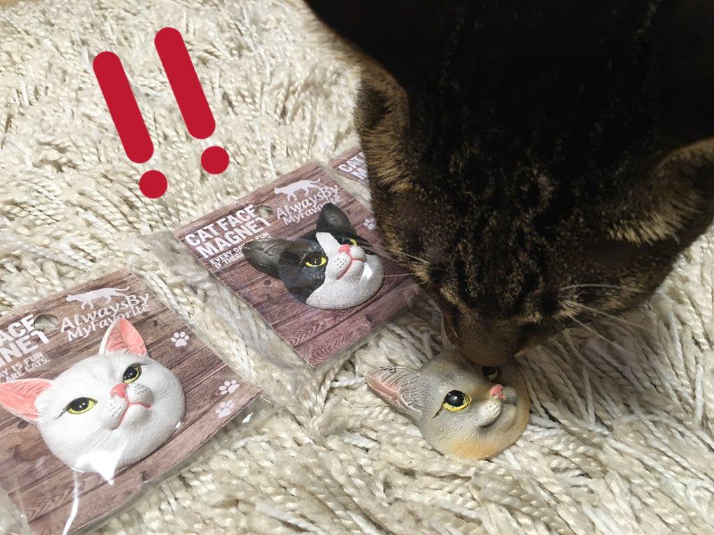 test ツイッターメディア - セリアで猫のマグネットを発見?全種類買ってしまいました?? リカ→ねぇ、ママ????これブン兄に似てる??これはリカがもらいましゅね?? ブンタ→うん?僕にそっくりだニャ?? かっこいいなぁ??? #キジトラ #猫好きさんと繋がりたい #セリア https://t.co/xggFkMqjqF
