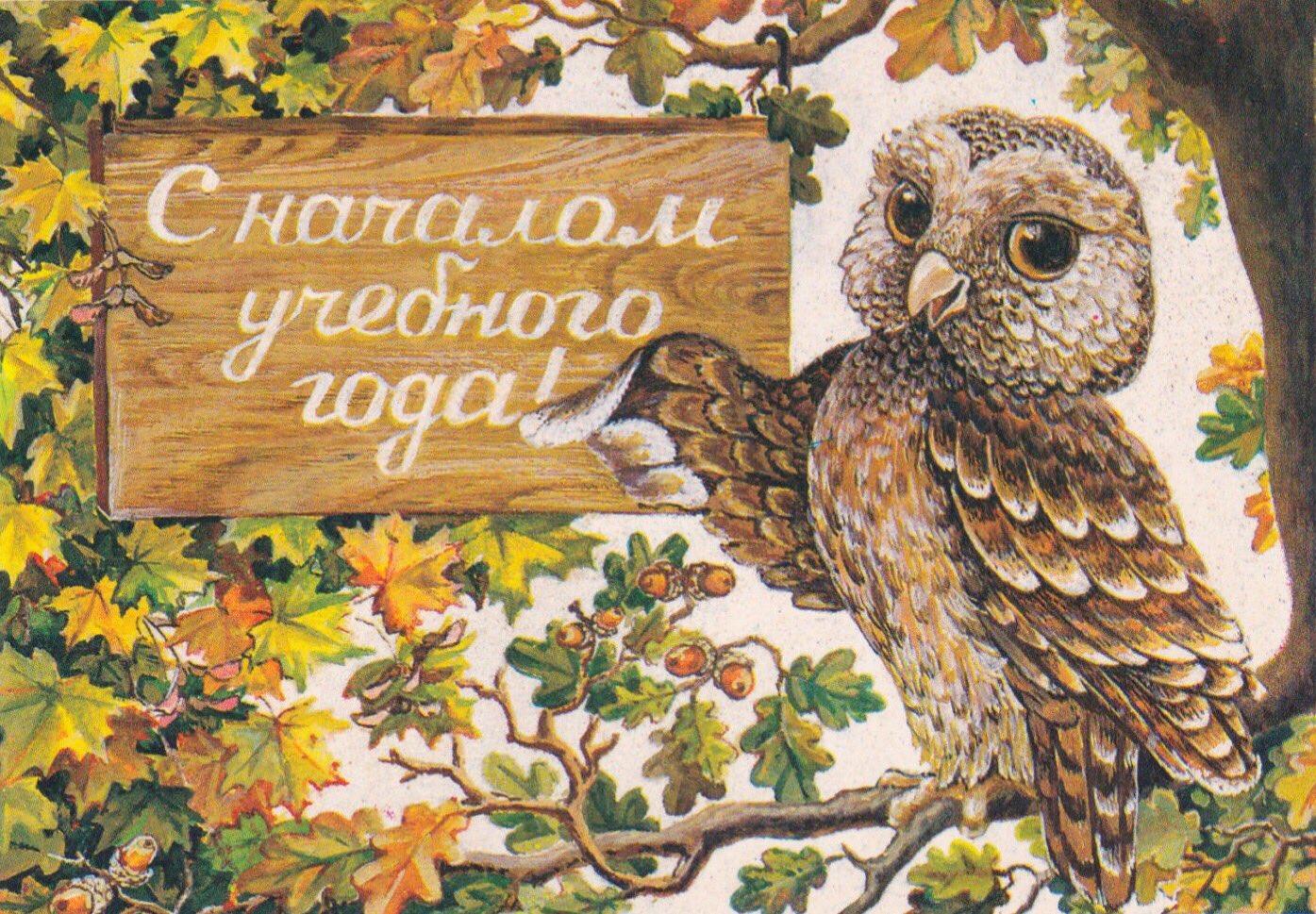 Картинки смешные, открытка сова день учителя