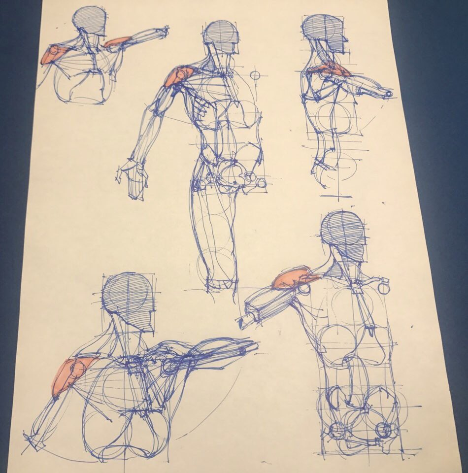 Anatomy Drawing For Artists On Twitter Anatomy Drawing Study