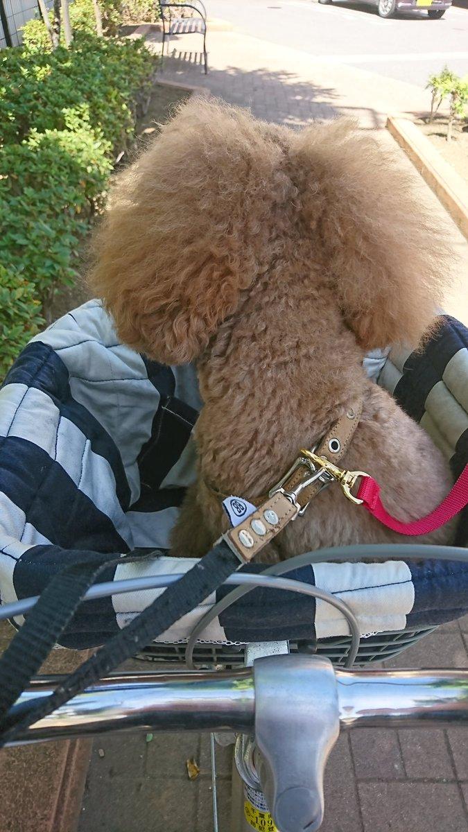 今日はトリミングデー。私もカラーからのヘッドスパ、スチームトリートメントでリフレッシュ! ランチにガーリックソフトシュリンプもチーんしてアースな一日。 #EARTH  #doggyearth #EARTHCAFEpic.twitter.com/JHt5jGi45P