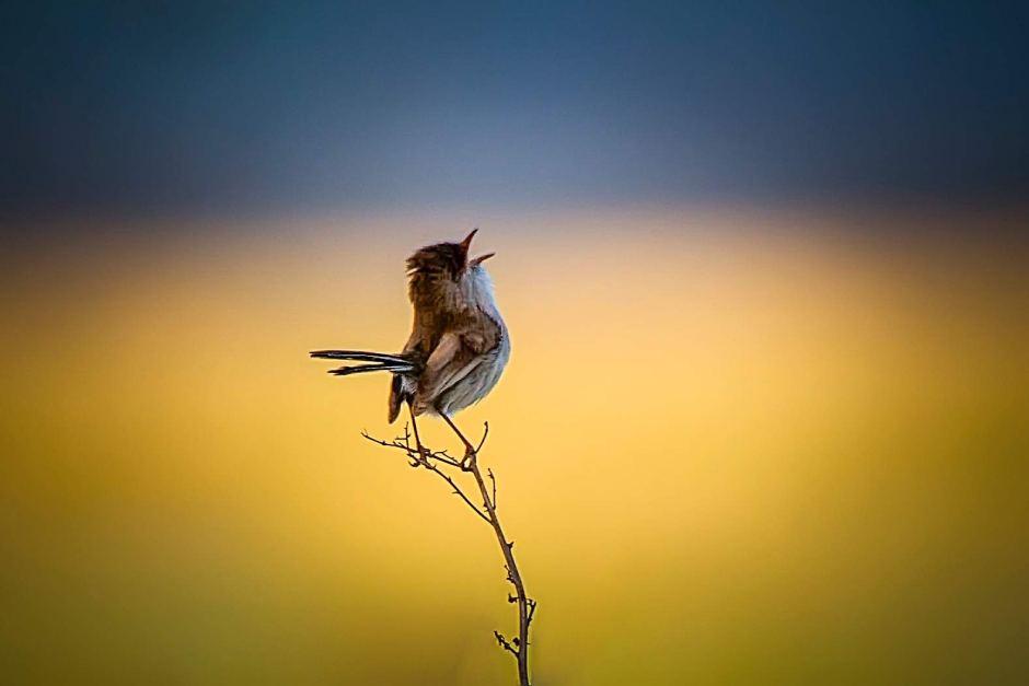 Картинки птички с утра