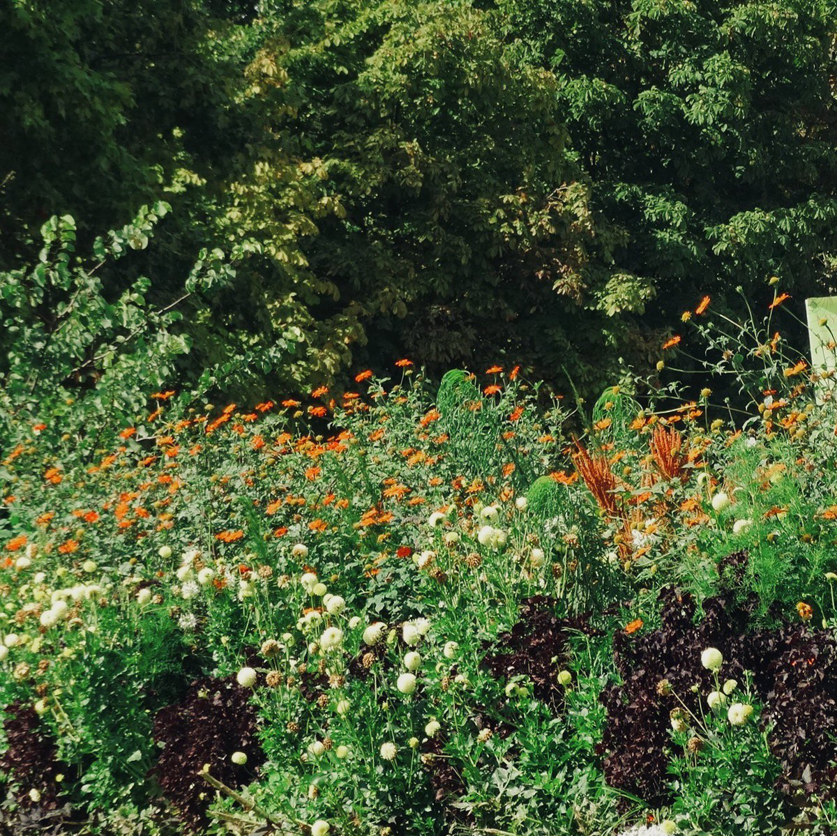 this spectacular blooming in the tuileries garden wears the colors of our next exhibit a dream of italy the marquis campanas collection - Tuileries Garden