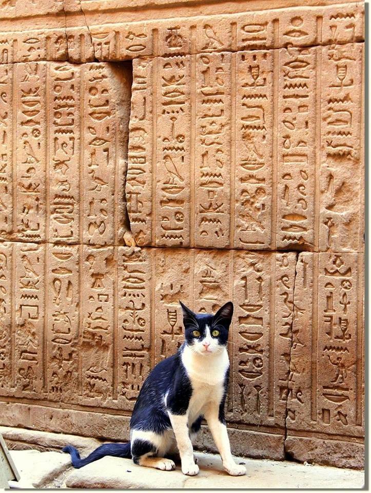 картинка поклоняются кошкам вижу такую природу