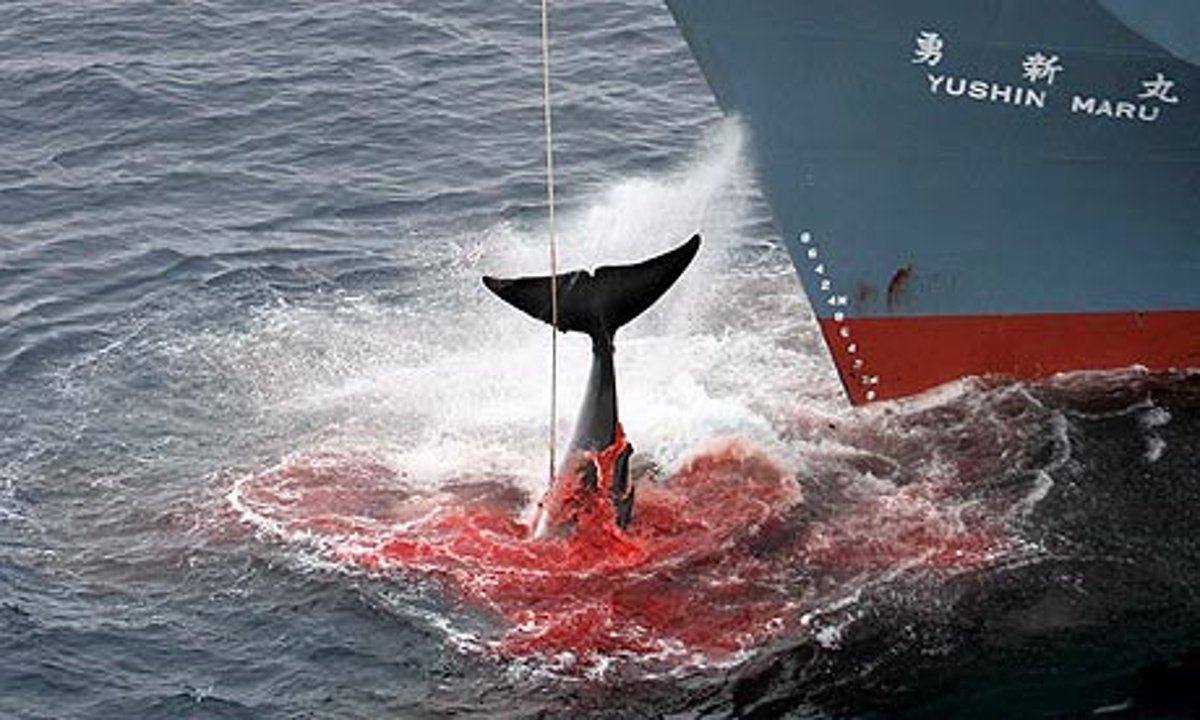 unless whaling is restricted all whaling stocks will ultimately be depleted Ultimately, however, the fact that commodity price shocks have no discernible effect on new conflict onsets, but some effect on ongoing conflict, suggests that political stability might be less sensitive to income or temporary shocks than generally be- lieved.