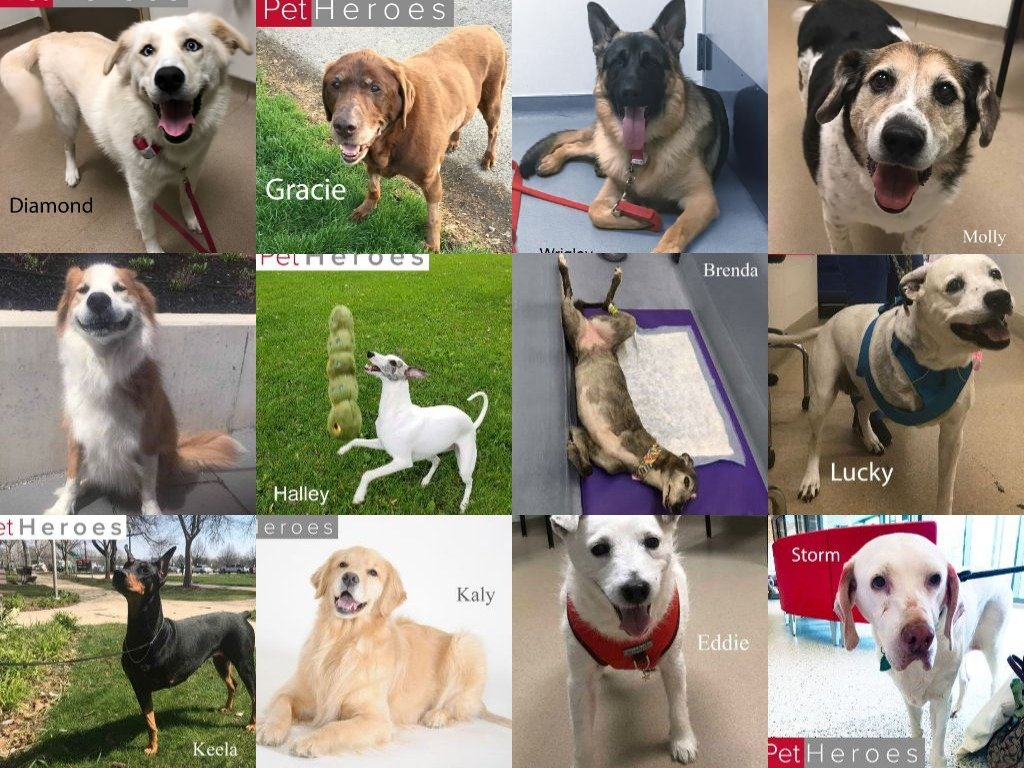 Osuvetclinicaltrials On Twitter Its National Dog Day Did