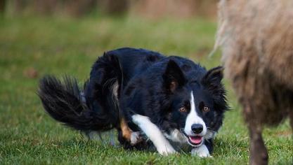 #Bapaume La première fête du #chien s'invite les 8 et 9 septembre https://t.co/GV4SvV2WAR