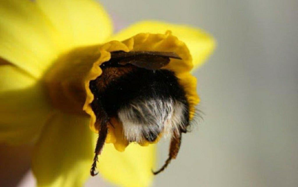 смешное фото пчелки милым неуклюжим