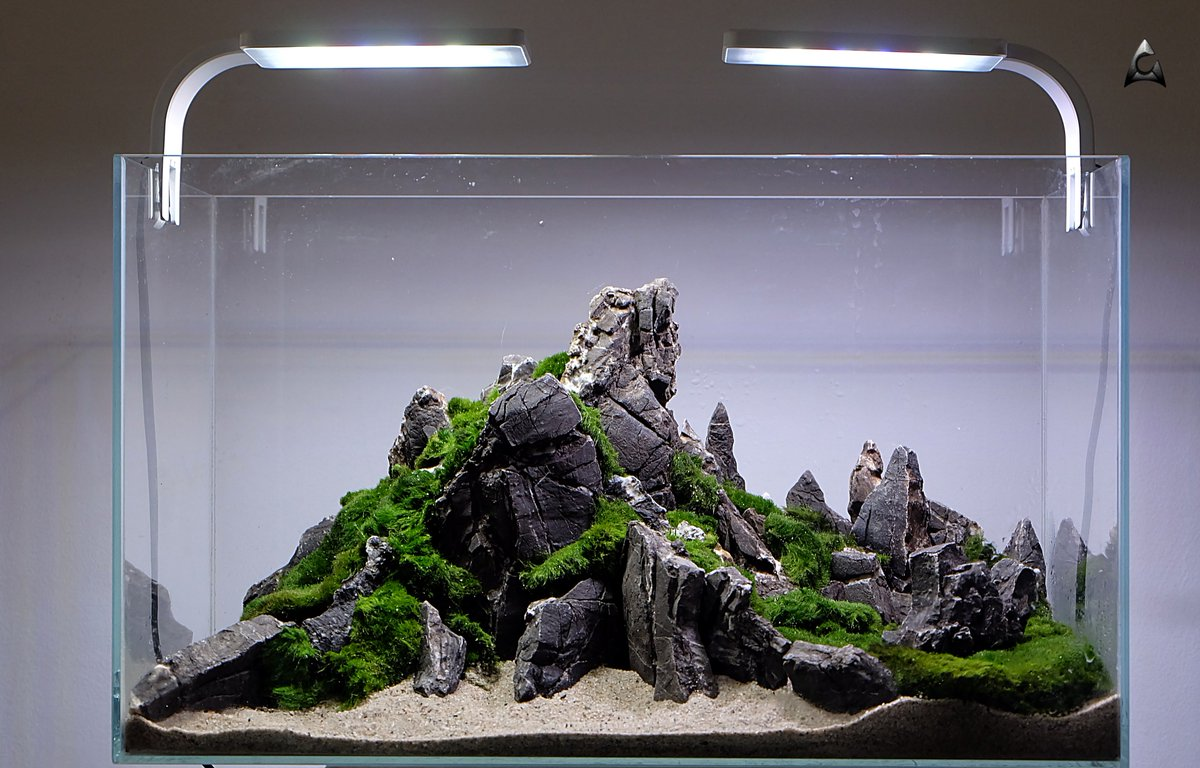 Aquaman Design On Twitter Ready Hardscape With Moss For