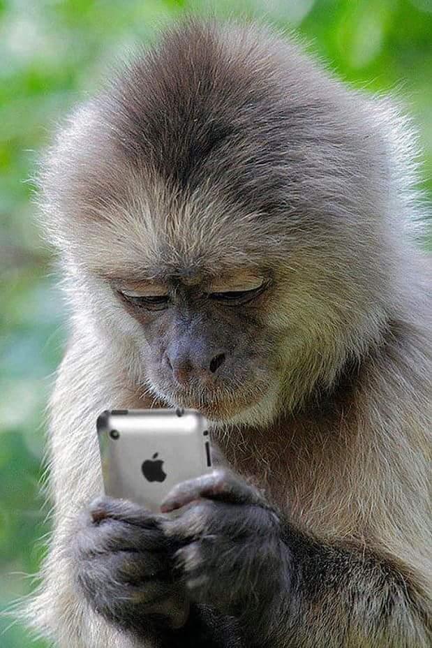 Надписями смыслом, на мобильный приколы и картинки