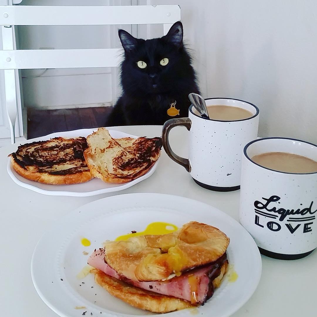 Картинка доброго утра лисы смешная с завтраком, добрым