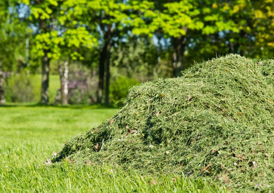 a pile of newly cut grass