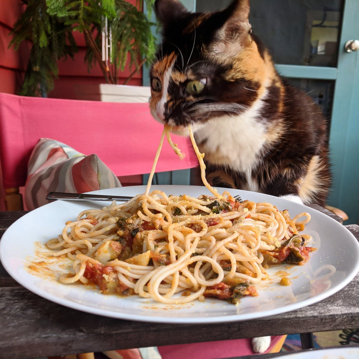 a calico cat furiously stealing a strand of spaghetti from a dinner plate