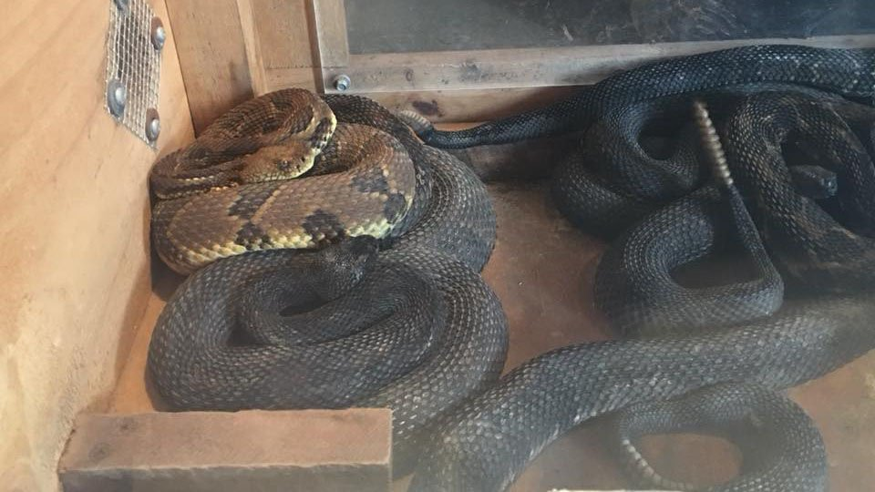 West Virginia Man Arrested w/ 17 Rattlesnakes Living in His House