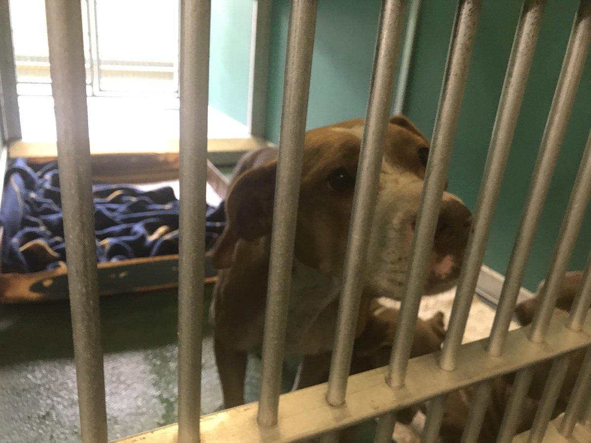 Dogs Bite Decatur Al: RIVIERA BEACH FL - A CITY EMPLOYEE WAS ...