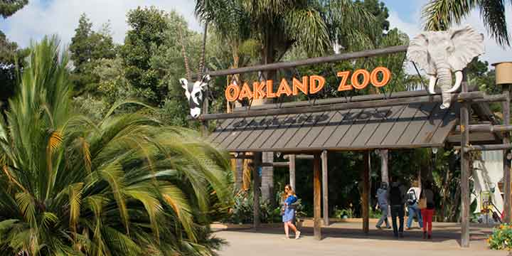 oakland zoos newest addition - 720×360