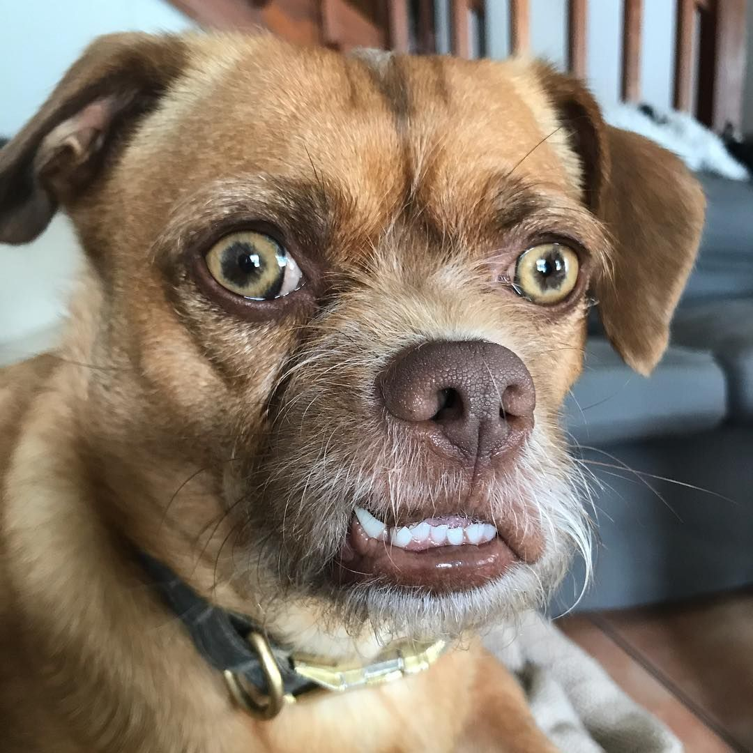 Злая морда собаки картинка