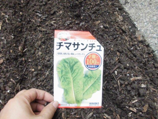 test ツイッターメディア - 8/29、ナス跡地には当初、カリブロ達を植える予定でしたが、隣のトマト跡地にカリブロ達を植えたので、ここには葉物類にすることにして、チマサンチュを2列蒔きました。被覆ドームで覆っています。でも、小松菜蒔けば良かったかな~と、後で後悔・・。なんでサンチュ蒔いちゃったんだろう~?#ダイソー https://t.co/8dsuAvdMVU