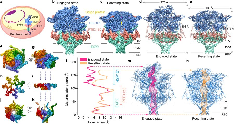strategies for evasion mechanism of parasites Our study provides new insights on mechanisms of immune evasion of malaria parasites and highlights the important function of surface coat proteins in the interplay between complement regulation and successful infection of the host.
