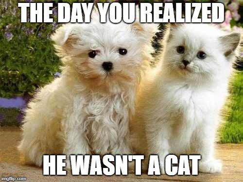 Sierra Pet Meds On Twitter Cute Catlovers Doglovers Kitten Puppy Memes Cats Bestmeow